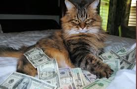 حتى القطط اصبحت فاسدة تخون الامانة وتعبد المال/ فيديو