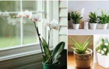 كشف مذهل.. النباتات تعطس مثل البشر وتعدي بعضها بالجراثيم