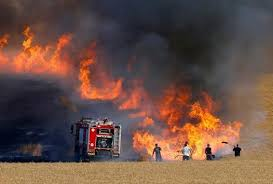 بين اهمال وافتعال تتزايد نسبة الحرائق في الغابات بمحافظة عجلون