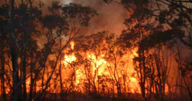 حريق يأتي على 500 دونم من المحاصيل الزراعية والاشجار الحرجية في البلقاء