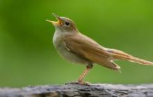 سماع تغريد الطيور يبعث على السعادة وينعش الصحة العقلية والعاطفية للانسان