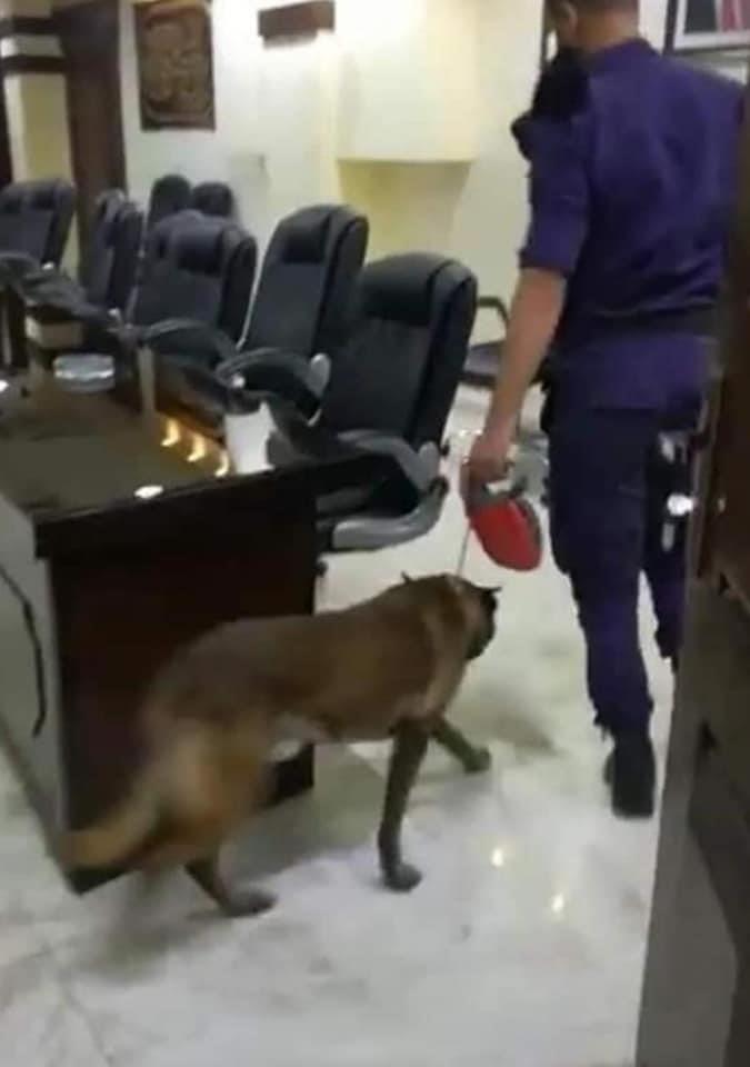 الأمن يعترف ان استخدام الكلاب البوليسية في بلدية اربد اجتهاد شخصي خاطئ