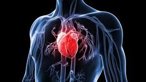 بتناول الخضار والفواكه وزيت الزيتون تحمي قلبك من الأمراض