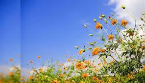 تلاشي الموجة الحارة وعودة الأجواء الربيعية لمعظم المناطق اليوم