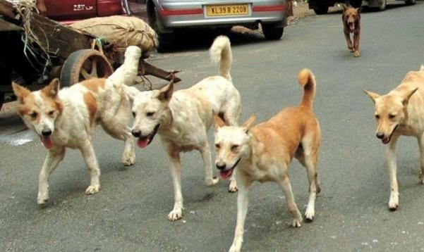 خبراء بريطانيون يستعدون لاطلاق الكلاب على فيروس كورونا
