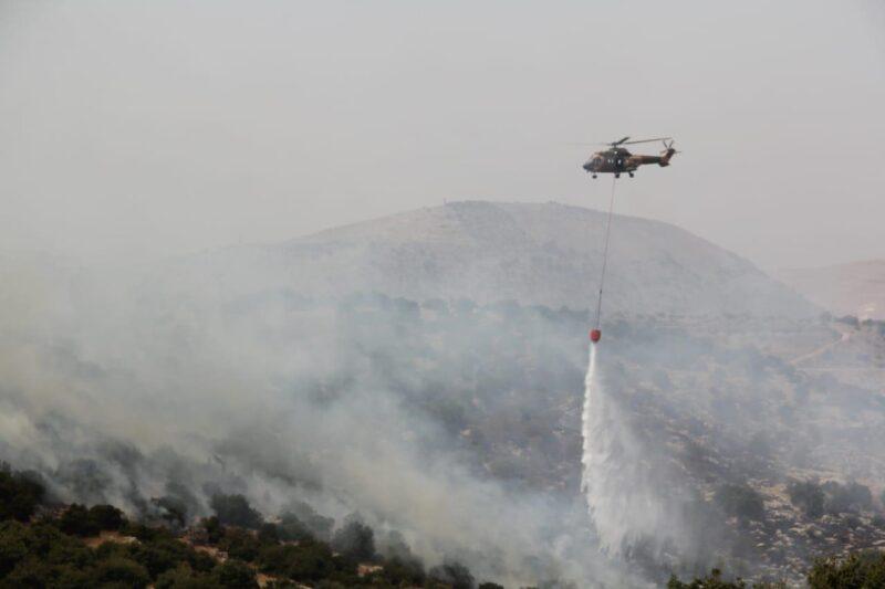 الحرائق تفتك بالاشجار المعمرة والنادرة في مجافظة عجلون